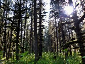 forest_kenai_fjords_alaska_turnagain