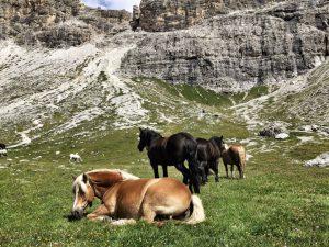 Pferde_Südtirol_turnagain