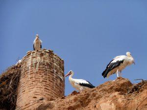 el_badi_palast_marrakesch_marokko_turnagain